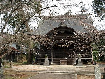 金麗社の桜-1