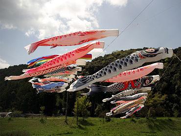 大田川のこいのぼり-2009-1