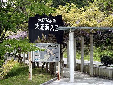 大正洞園地のふじ-2009-1