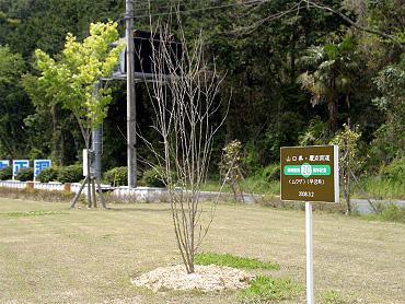 記念植樹-2009