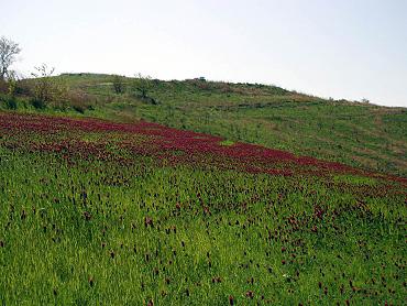 ストロベリーキャンドル-2009-1