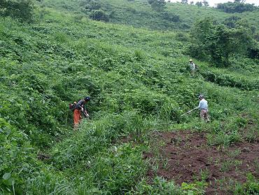 ドリーネの開墾作業-1