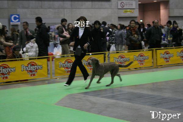 横浜ドッグショーと、丹沢 005