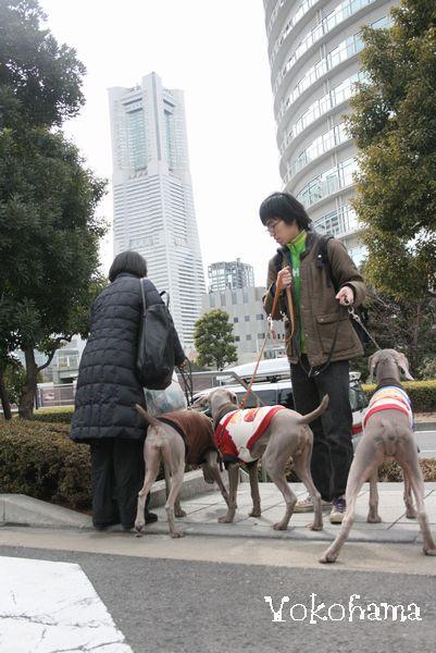 横浜ドッグショーと、丹沢 024