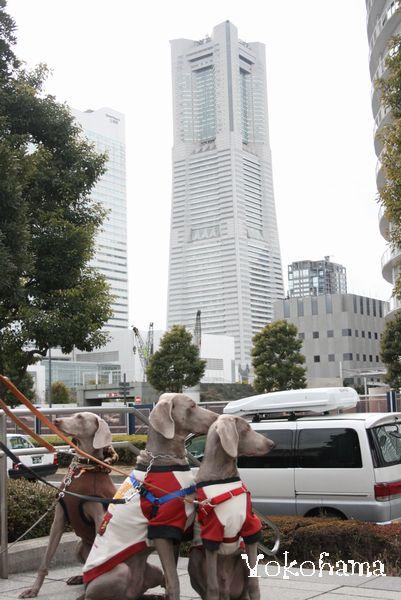 横浜ドッグショーと、丹沢 025