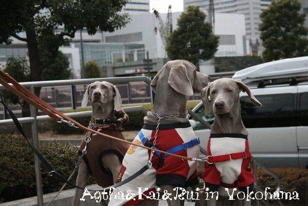 横浜ドッグショーと、丹沢 026