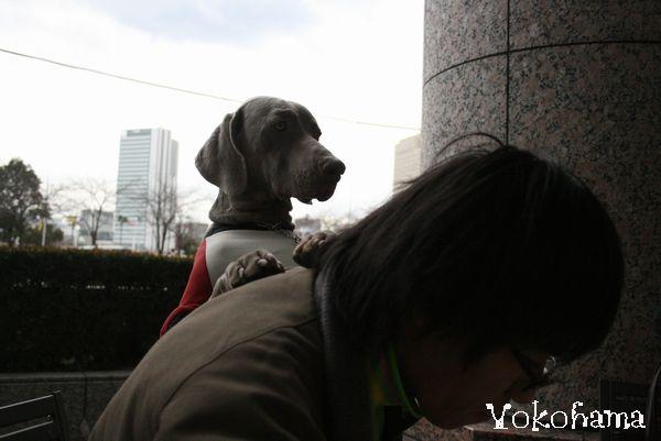 横浜ドッグショーと、丹沢 028