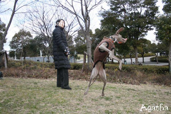旅・横浜ドッグショー 001