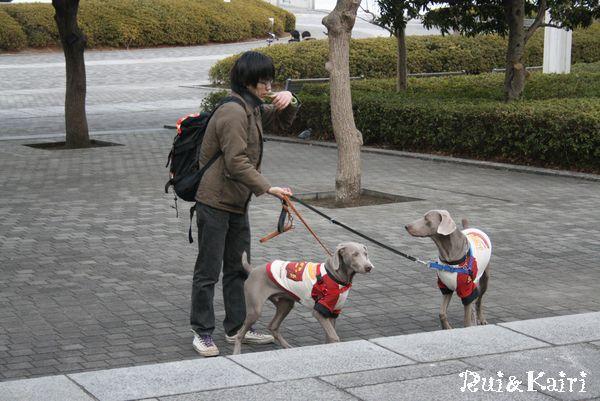 旅・横浜ドッグショー 004