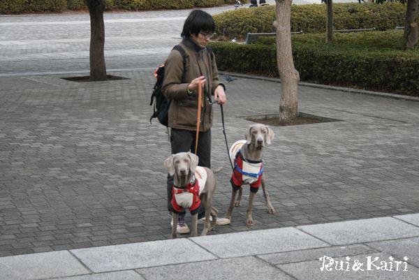 旅・横浜ドッグショー 005