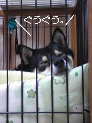 09 29ふてぶてし子ちゃん