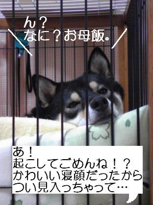 09 29ふてぶてし子ちゃん1