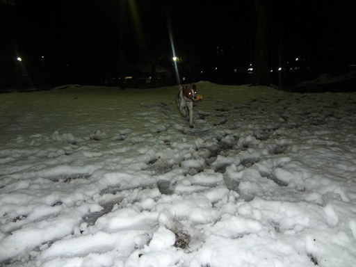 20120301雪002