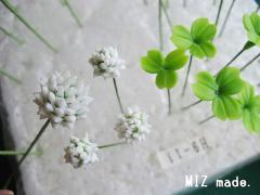 ミニシロツメクサ花20110329
