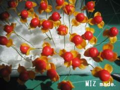 ツルウメモドキ彩色後20110406