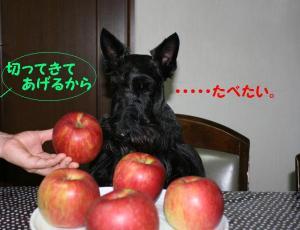 a_20081020181755.jpg