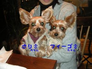 a_20081110214148.jpg
