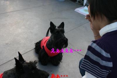 a_20081114231108.jpg