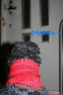 a_20081116215924.jpg
