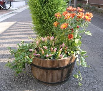 秋の寄せ植え