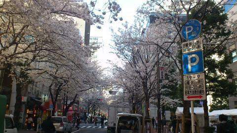 sakura2012_02