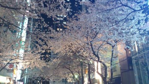 sakura2012_04