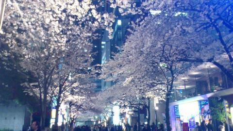 sakura2012_05