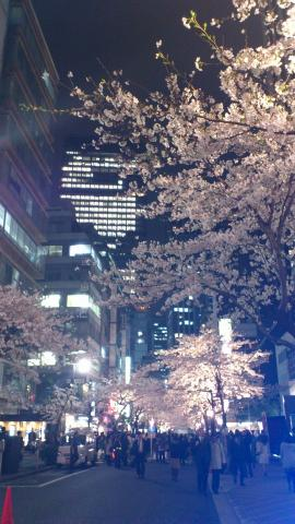 sakura2012_09