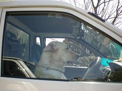 drivedog.jpg