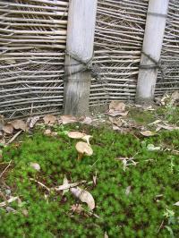 桂離宮植物