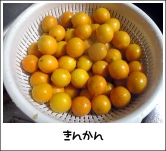 Image0251_20081218233202.jpg