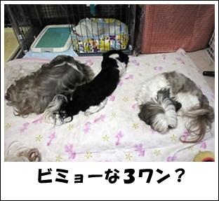 Image0481.jpg