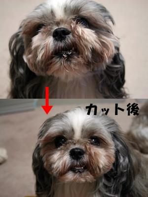 makuro_20090625113128.jpg