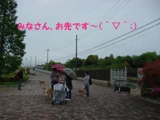 DSC04552-1.jpg
