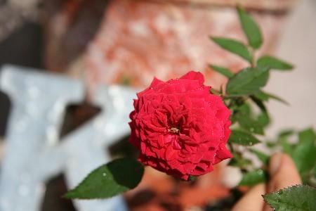 redminibara2008112.jpg