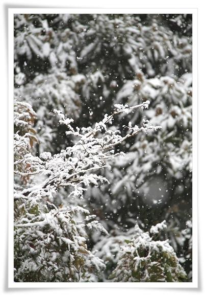 大雪の日3
