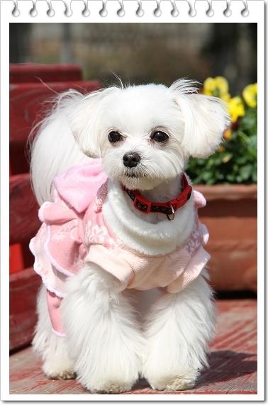 ピンクのワンピ1