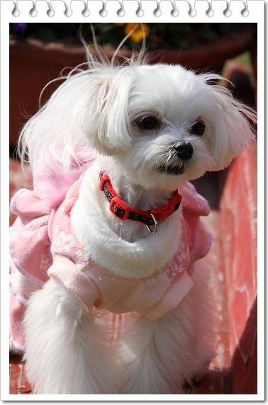 ピンクのワンピ2