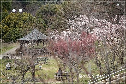 黒鳥山公園2
