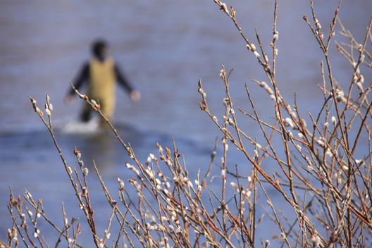 荒川サクラマス釣り通信 花立堰堤下