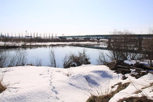 荒川サクラマス釣り通信 荒川橋