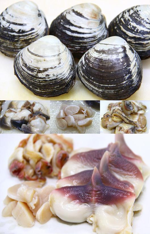 北海道 ホッキ貝