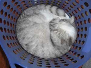 丸くなる猫1
