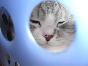 丸くなる猫2