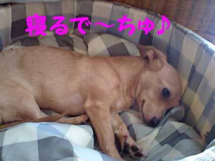 寝るで~ちゅ♪