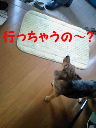 行っちゃうの~?