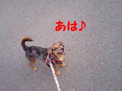 かわいこちゃ~んo(≧∇≦)o