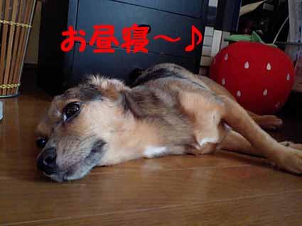 お昼寝~♪