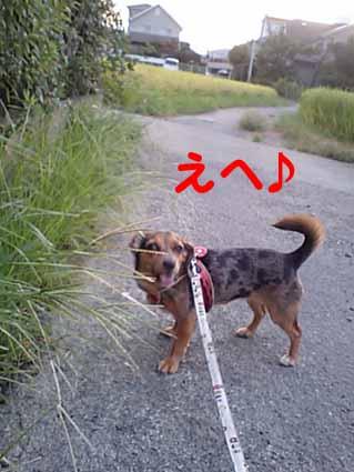 お散歩ちゅ