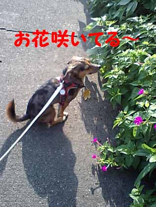 お花咲いてる~